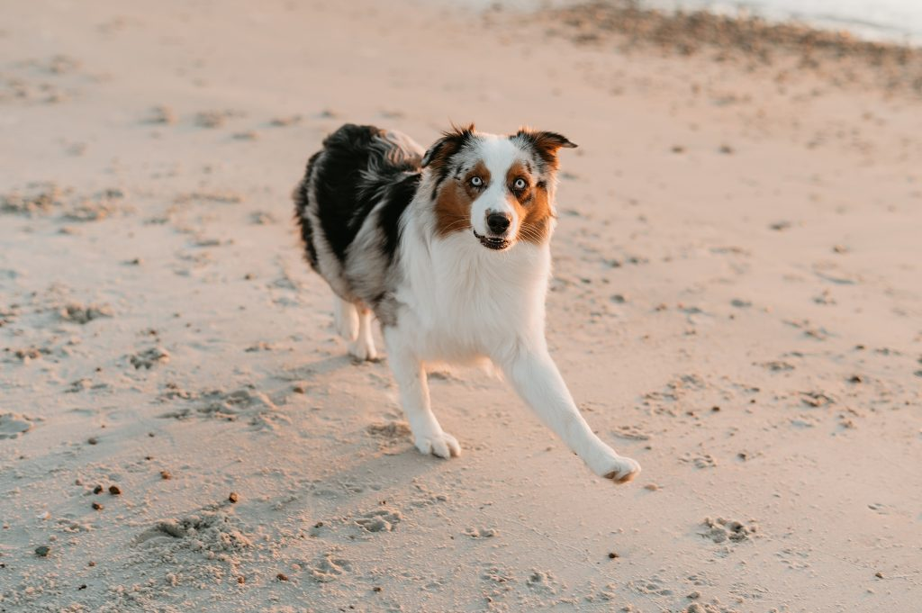 dog on the beach in the cape